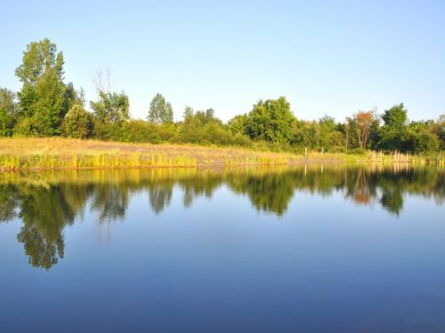 2 5 acres on west bass pond 18 900 farm for sale by for Bass pond construction
