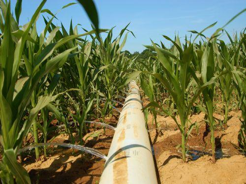 Farm Land For Sale : Fargo : Monroe County : Arkansas