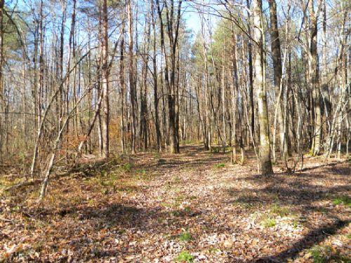 5 Acres In Tug Hill Region Hunting : Williamstown : Oswego County : New York