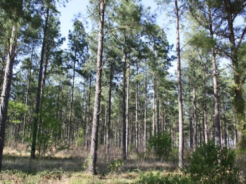 Two Land Tracts In Aiken County, Sc : Wagener : Aiken County : South Carolina
