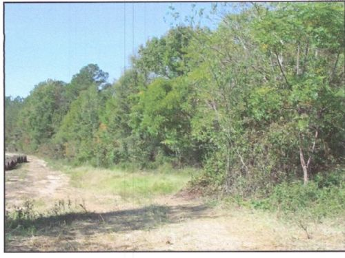 46.1 Acres Off Idlewood Road : Waynesboro : Burke County : Georgia