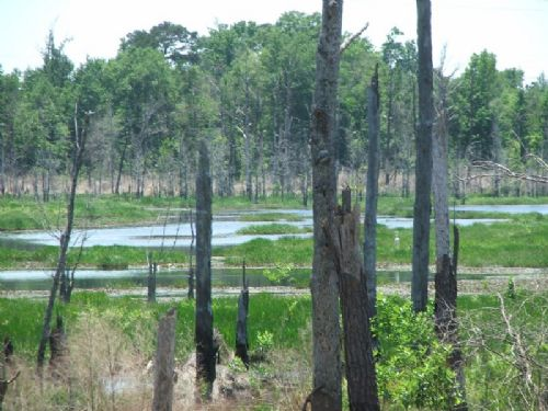 170 Acres : Belleville : Conecuh County : Alabama