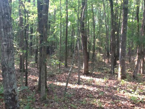 6.12 Ac. Hunting Retreat/homesite : Colbert : Oglethorpe County : Georgia