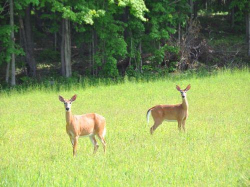 Use 500 Acre State Forest $14,900 : Sandy Creek : Oswego County : New York