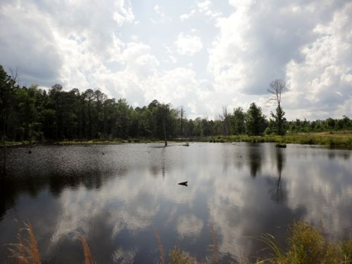 7 Acre Pond On 300+ Acres : Sparta : Hancock County : Georgia