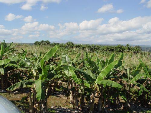 Tropical Farm Land For Lease : Hilo : Hawaii County : Hawaii