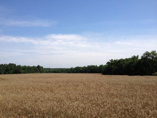 Warbonnet Farms : Thomasville : Thomas County : Georgia