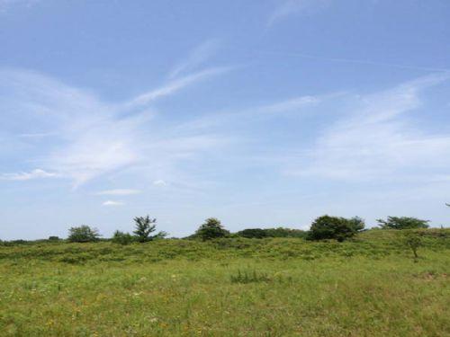 Deep Fork Homesites 20 Acres Lot 7 : Mason : Okfuskee County : Oklahoma