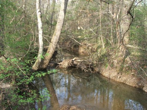 78 Acres Of Hardwoods And Hunting : Lawley : Bibb County : Alabama