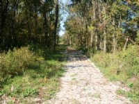 104.3 Acre Hunting - Combo Tract