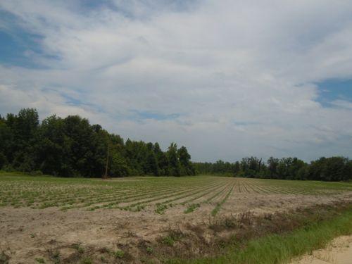 Gay Farm Tract 2 : Millen : Jenkins County : Georgia