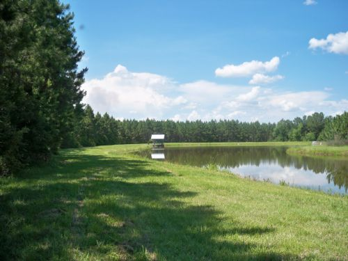 Warrior Creek Tract : Norman Park : Colquitt County : Georgia