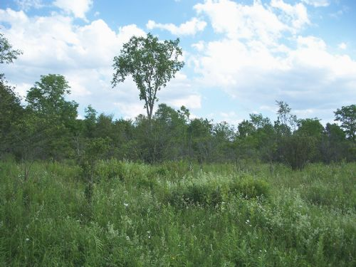 15 Acres Bordering State Forest : Mcdonough : Chenango County : New York