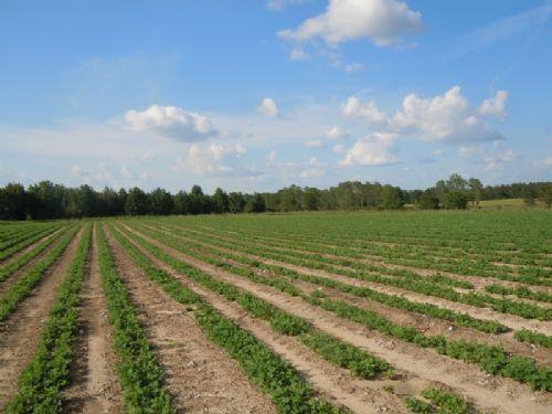 Perkins Greenfork Farm : Perkins : Jenkins County : Georgia