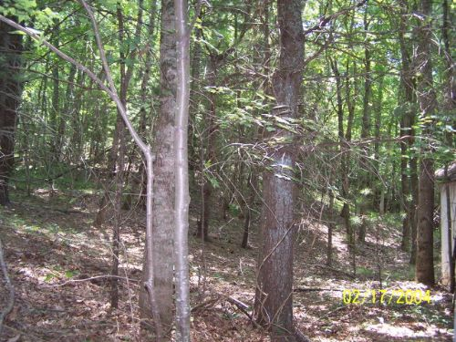 27+ Private & Secluded Acres : Independence : Grayson County : Virginia