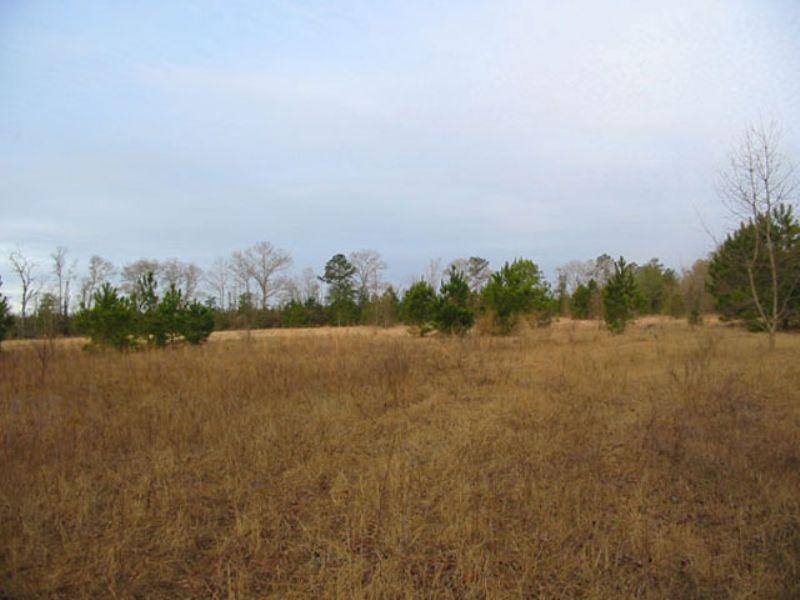106 Acres Open & Wooded : Hephzibah : Burke County : Georgia