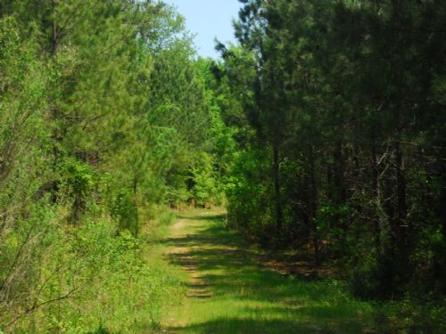 120 Acre Timberland Tract : Chester : Chester County : South Carolina