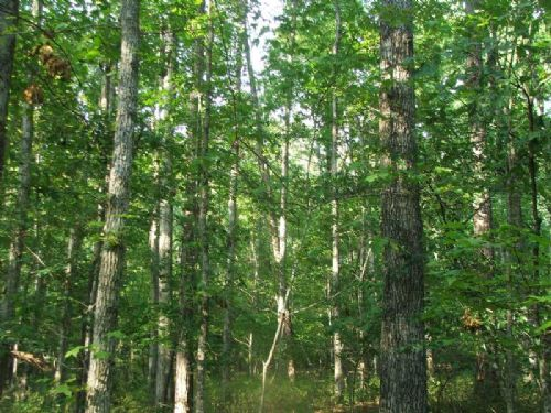 196 Acres Of Timber And Hunting : Moundville : Hale County : Alabama