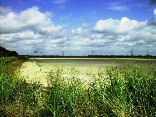 228 +/- Acre Farm : Lonoke : Lonoke County : Arkansas