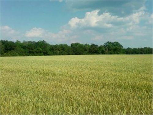 Beautiful 70 Acre Farm : Mayesville : Lee County : South Carolina