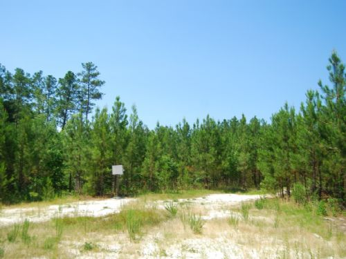 268 Acre Timberland/hunting Tract : Chester : Chester County : South Carolina