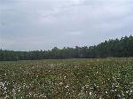 50 +- Acre Mini Farm : Nicholls : Bacon County : Georgia