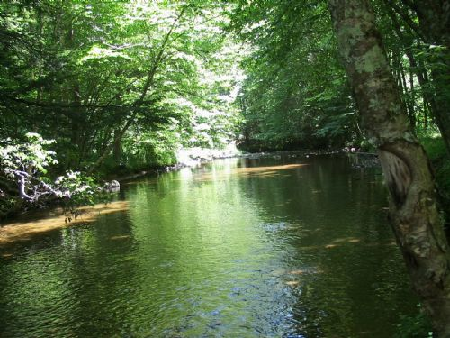 Creek Frontage Near Grayson Highlan : Independence : Grayson County : Virginia