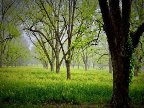 Piney Grove : Cairo : Grady County : Georgia