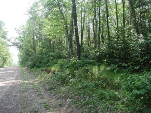 306 +/- Ac Trophy Whitetail Habitat : Phillips : Price County : Wisconsin