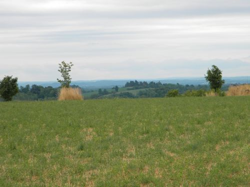42 Acres Tillable Farmland Fence : Ira : Cayuga County : New York
