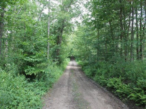 150 Acres Woodlands Tug Hill Region : Boylston : Oswego County : New York