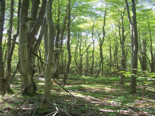 14 Acres Wooded Hunting Land : Pitcher : Chenango County : New York