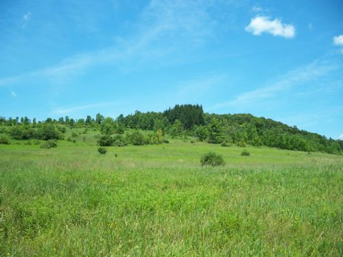 47 Acres Farm Perfect For Horses : Smyrna : Chenango County : New York