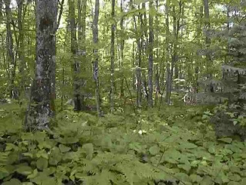 Lot 8 Indian Cemetary Rd. 1068075 : Lanse : Baraga County : Michigan