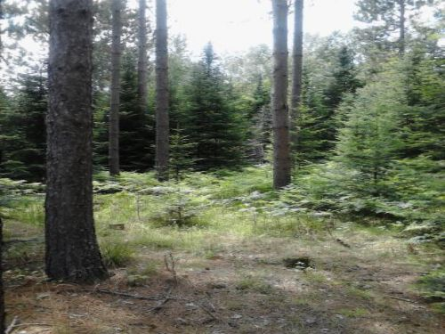 36 Acres In Sugar Camp : Sugar Camp : Oneida County : Wisconsin