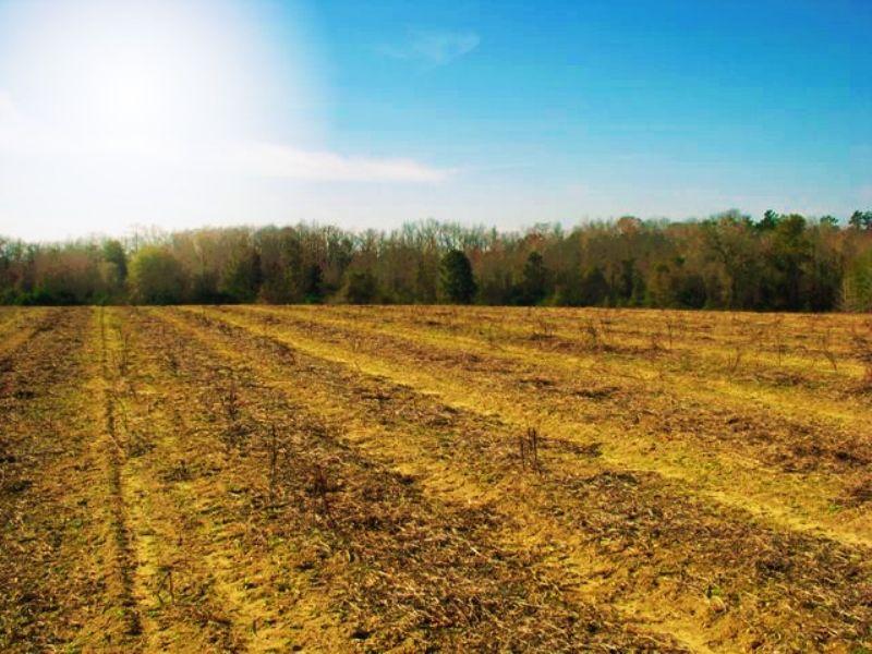 Daniels Farm : Sylvania : Screven County : Georgia