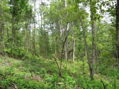 10 Acre Homesite In The Country : Richburg : Chester County : South Carolina