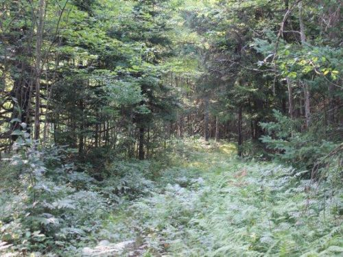 10 Acres Borders State Land : West Leyden : Lewis County : New York