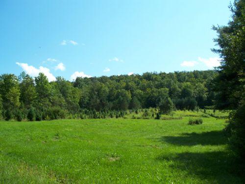 94 Acre Christmas Tree Farm Organic : Greene : Chenango County : New York