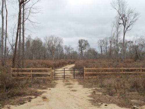 385 Acres On Altamaha River : Jesup : Wayne County : Georgia