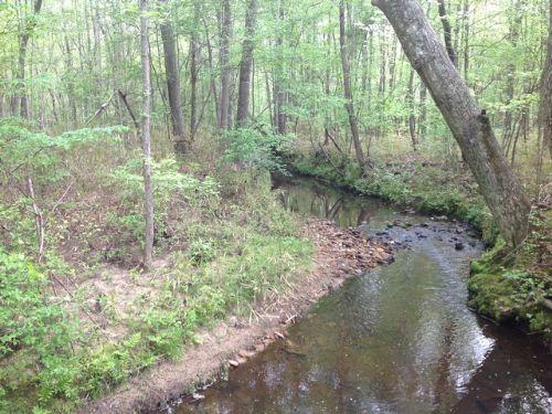 88+/- Acres Timberland Near Ga Line : Roanoke : Randolph County : Alabama