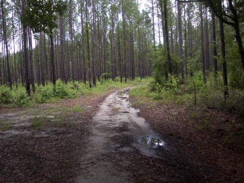 92.3 Acres : Allendale : Allendale County : South Carolina
