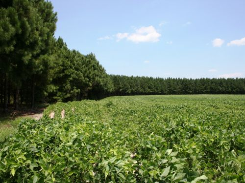 Ford Properties, Llc  Tract B : Green Sea : Horry County : South Carolina