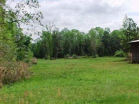 Secluded Tract With Home : Slocomb : Geneva County : Alabama