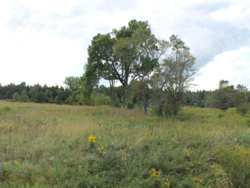 30 Acres Hunting Land Financing : Boonville : Oneida County : New York