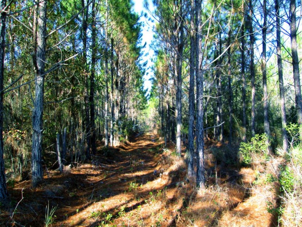 34 Acres, Timberland, Miller Hayes : Waycross : Ware County : Georgia