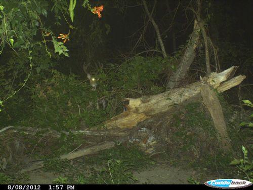 Concordia 40 Acres : Deer Prk : Concordia Parish : Louisiana