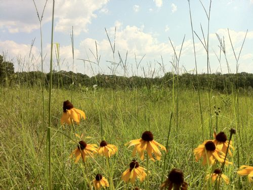 165 Acres : Clinton : Hinds County : Mississippi