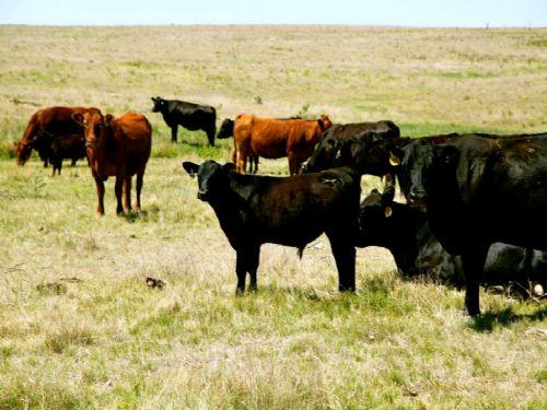 Lousberg Ranch Land Auction : Stoneham : Weld County : Colorado