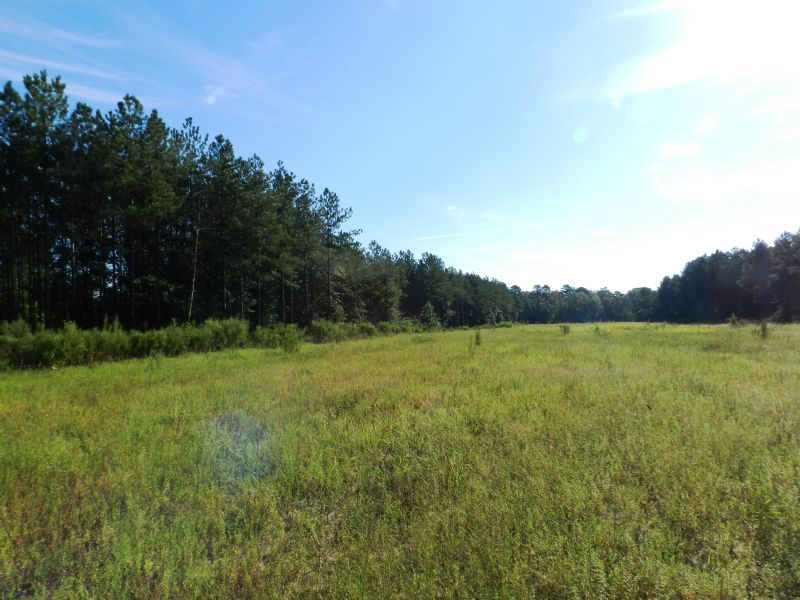 Morrison Tract - Hunting Property : Martin/appleton : Allendale County : South Carolina